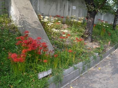 f:id:yuheipapa:20131020112546j:image