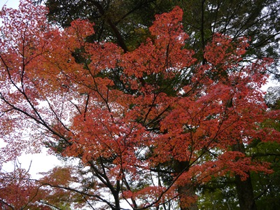 f:id:yuheipapa:20131202093525j:image