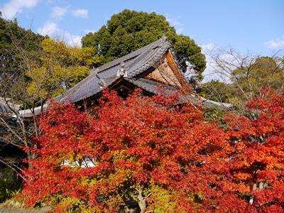 f:id:yuheipapa:20131202094245j:image