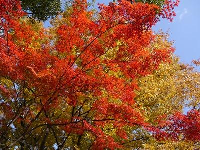 f:id:yuheipapa:20131202094247j:image
