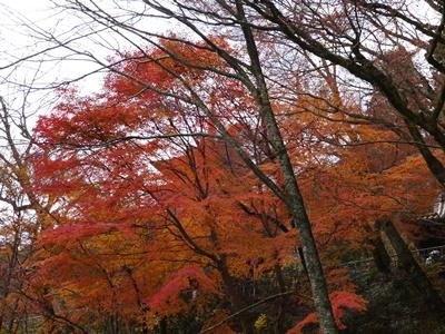 f:id:yuheipapa:20131202094723j:image
