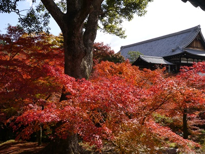 f:id:yuheipapa:20131202142920j:image