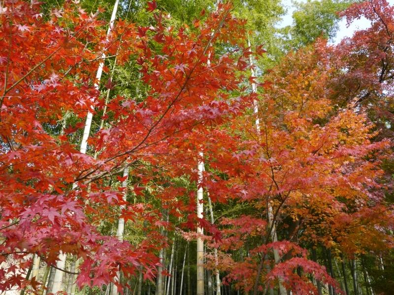 f:id:yuheipapa:20151230222509j:image:w360