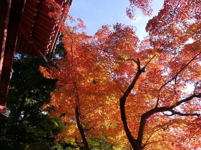 f:id:yuheipapa:20151230225332j:image:w360