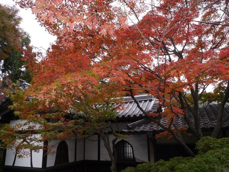 f:id:yuheipapa:20151230225831j:image:w360
