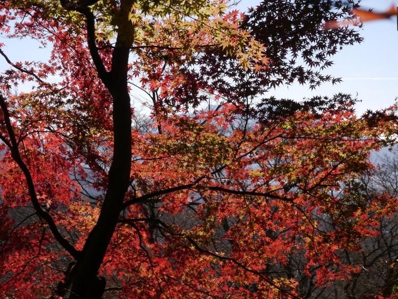 f:id:yuheipapa:20151230231729j:image:w360