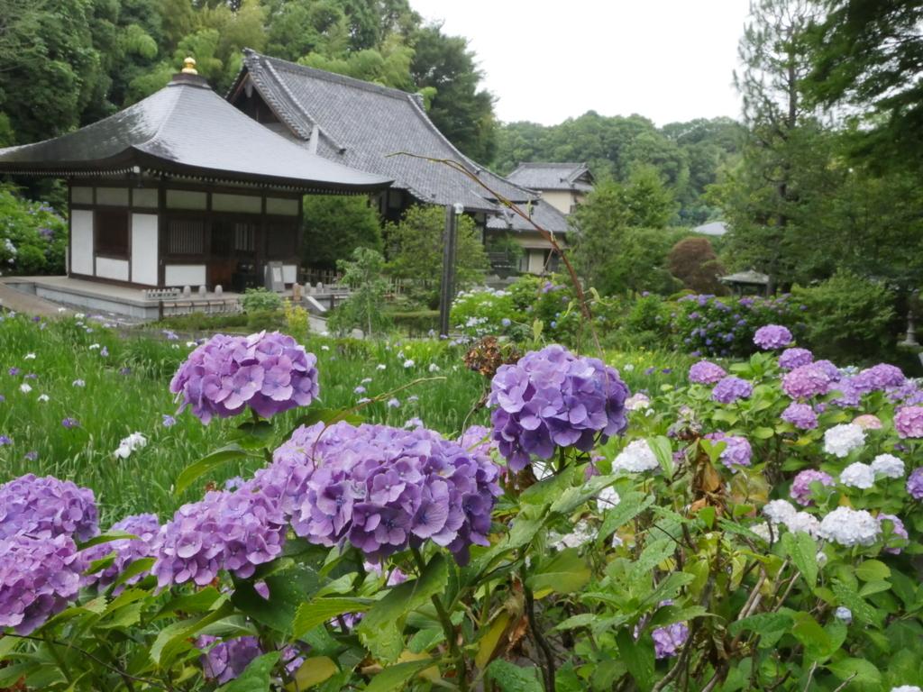 f:id:yuheipapa:20180619082511j:plain