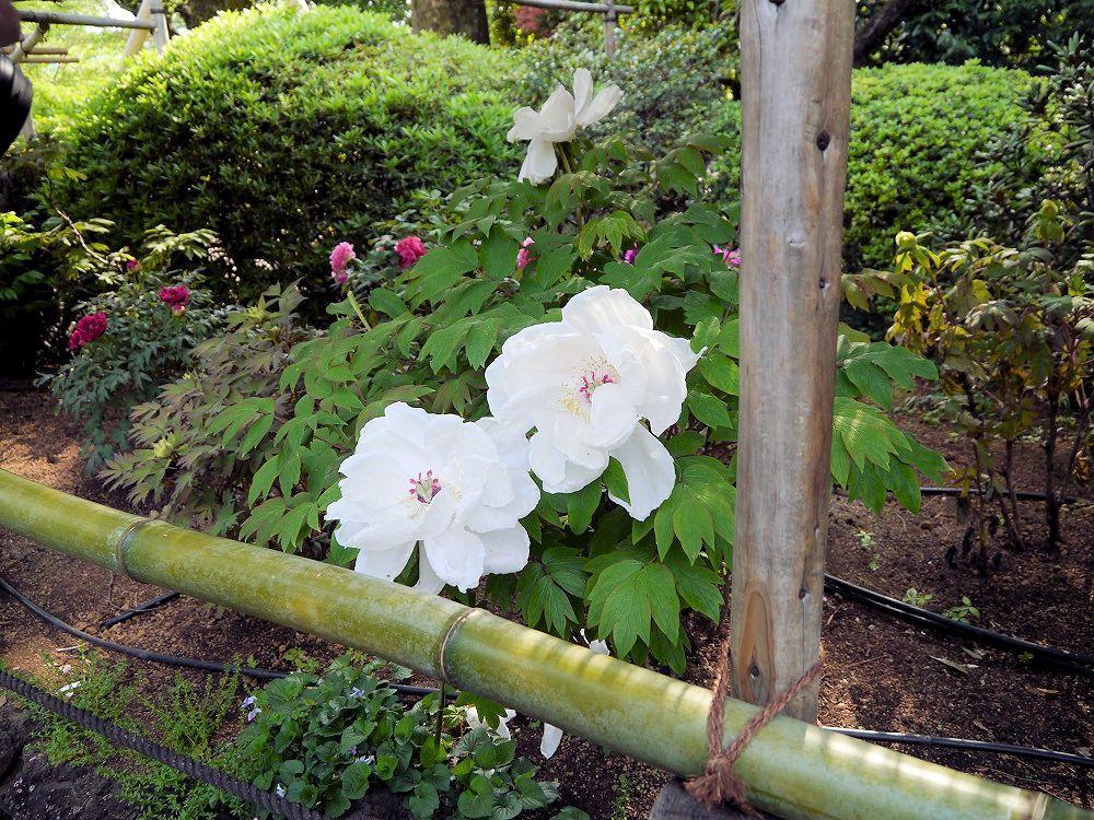 f:id:yuheipapa:20190512230019j:plain