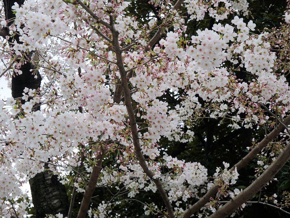 f:id:yuheipapa:20210508232309j:plain