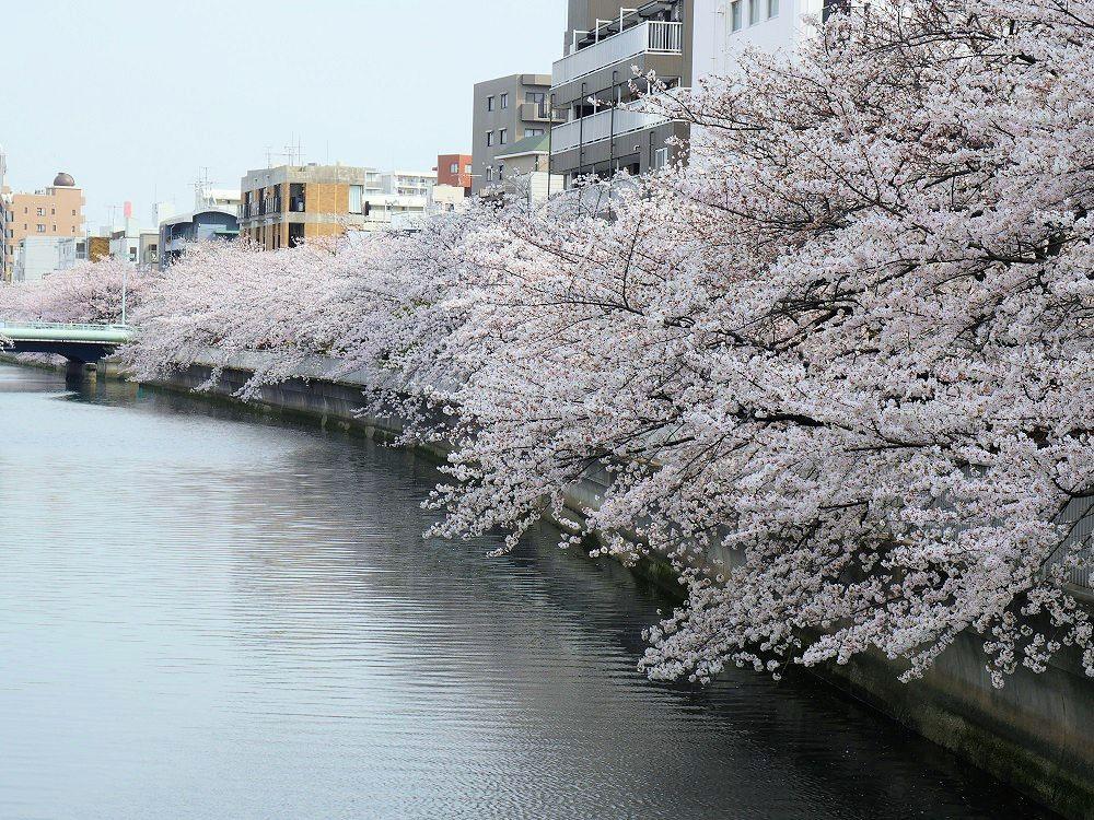 f:id:yuheipapa:20210508233340j:plain