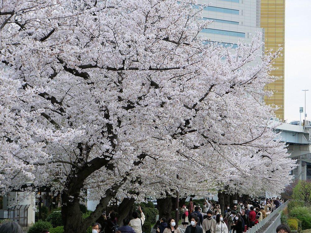 f:id:yuheipapa:20210508235319j:plain