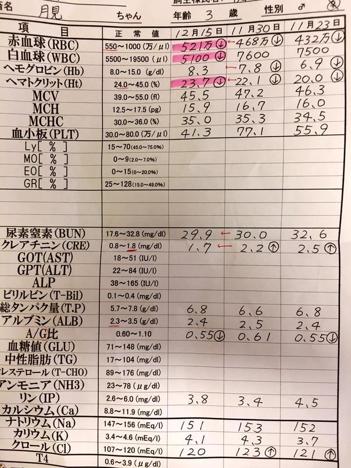 f:id:yuhib:20161215165254j:plain
