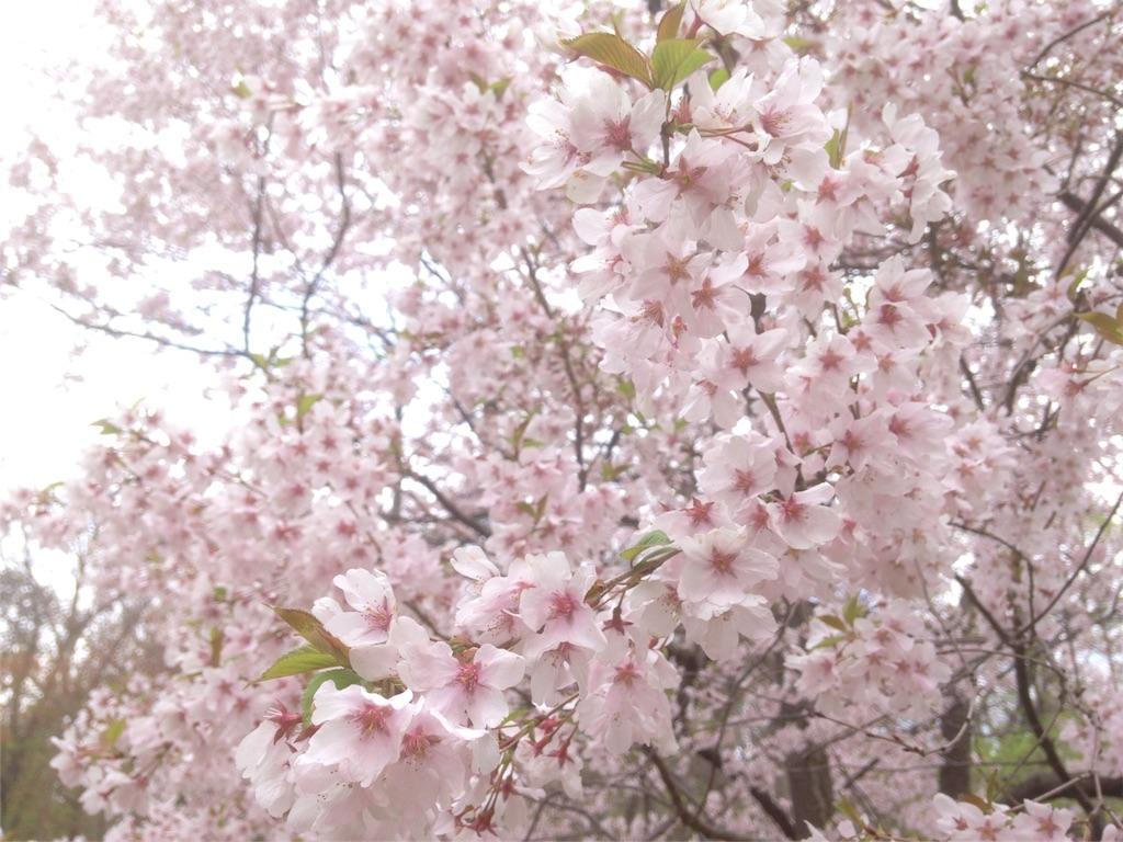 f:id:yui_aochang:20160505141104j:image