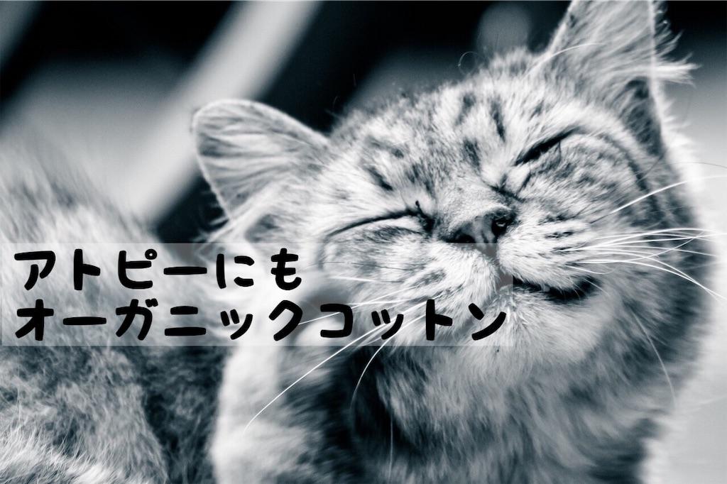 f:id:yuichi0519:20191019202216j:image
