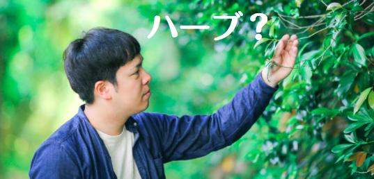 f:id:yuichi44:20170617165653p:plain