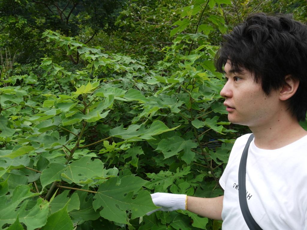f:id:yuichi44:20170730173738j:plain