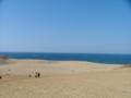 [海]鳥取砂丘