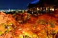 [夜景][紅葉]清水寺