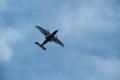 [飛行機][空]プロペラ機