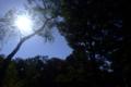 [空]井の頭公園