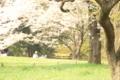 [桜]公園