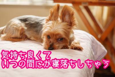 f:id:yuichisatoblog:20200508193918p:plain