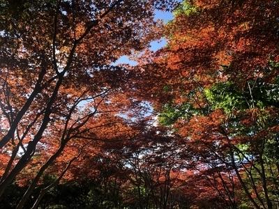 f:id:yuichisatoblog:20201007191118j:plain