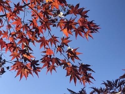 f:id:yuichisatoblog:20201007191252j:plain