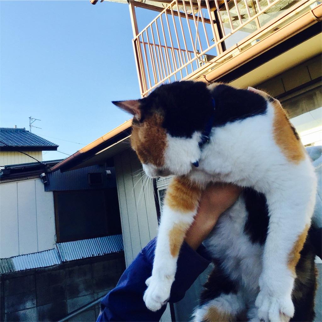 f:id:yuicoogawa:20170425005125j:image