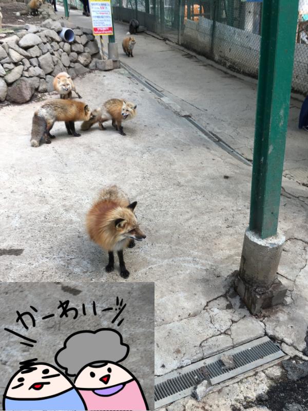 f:id:yuihitsuzi:20180504195545j:plain