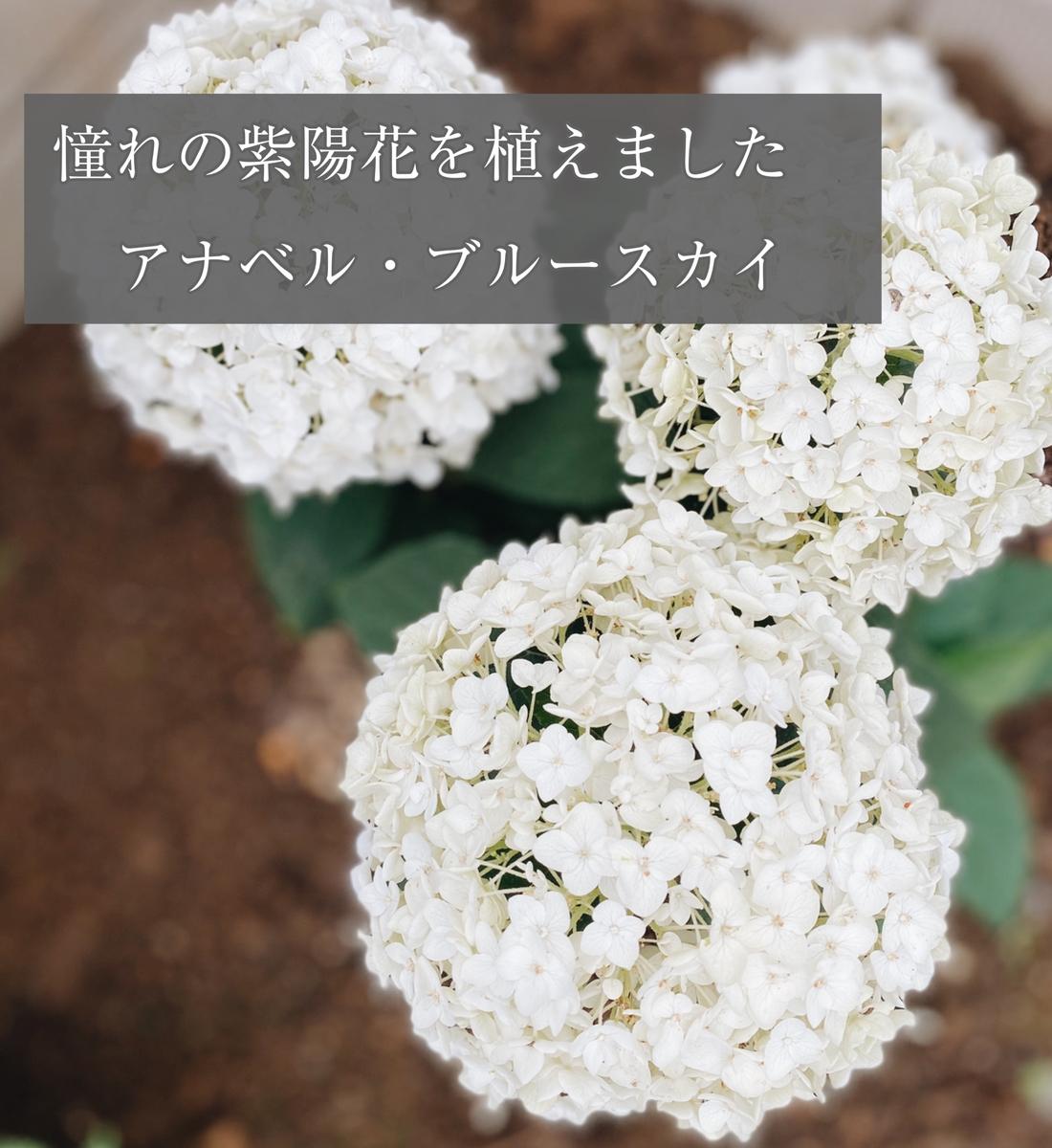 f:id:yuika_bob:20200707232510j:plain