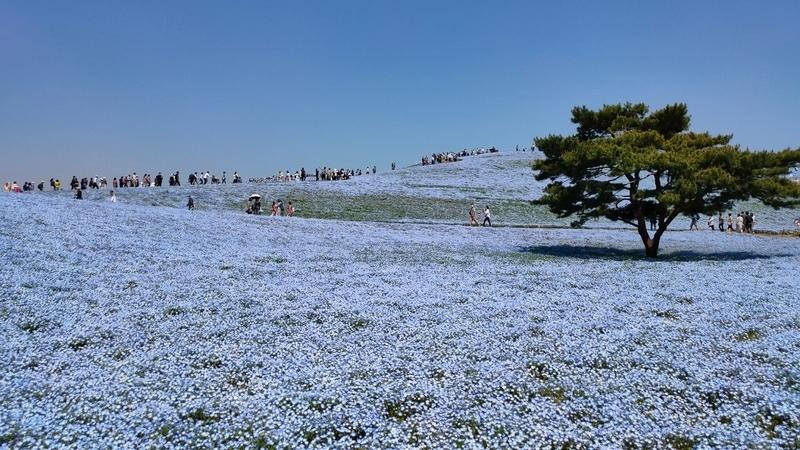 f:id:yuiyu22:20210421142544j:plain