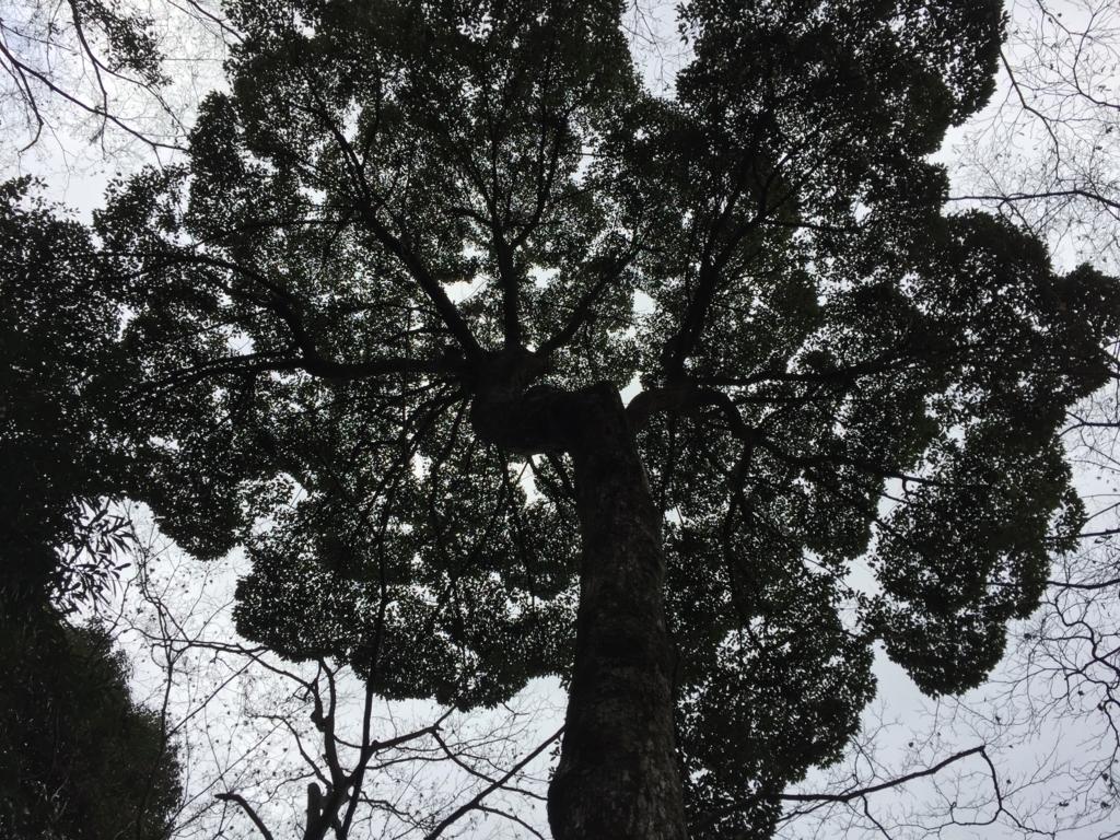 f:id:yuji-52-grn-00:20180522045620j:plain