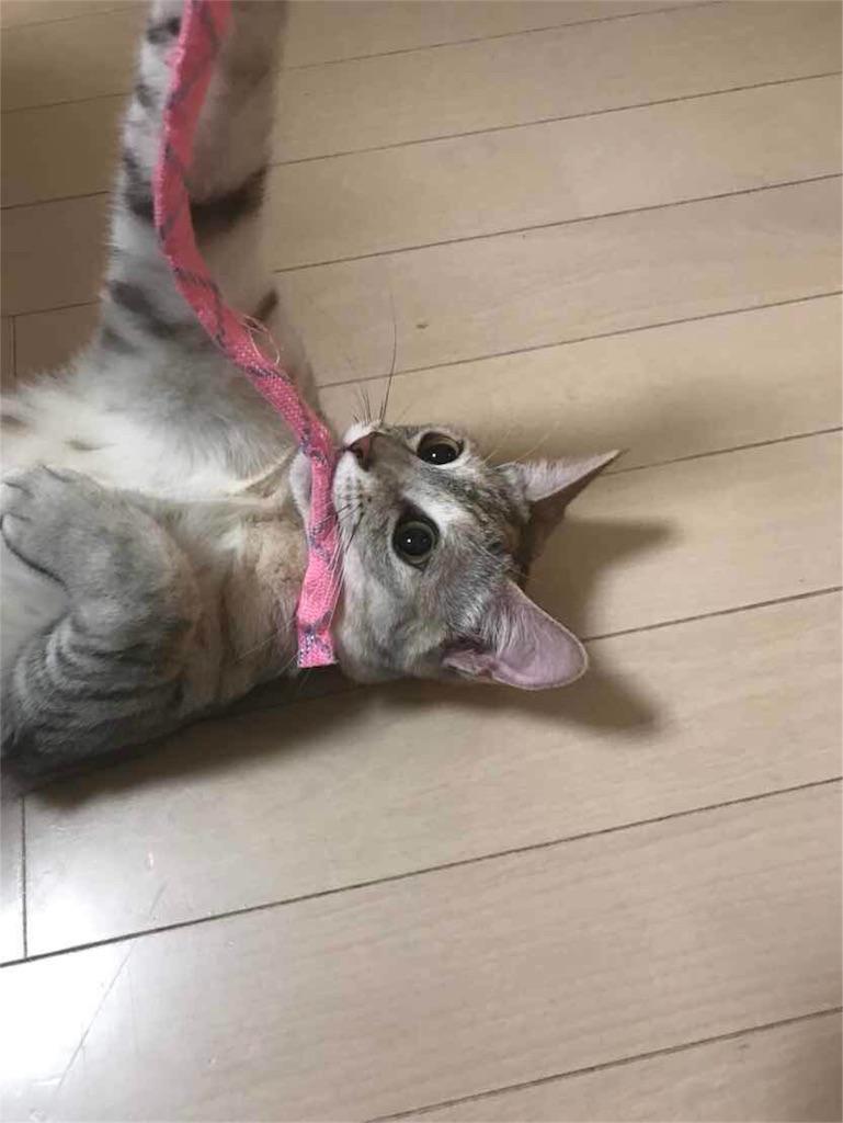 f:id:yuji281355:20180915140900j:image