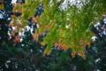 [京都新聞写真コンテス]秋の縁取り