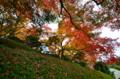 京都新聞写真コンテスト 秋の斜面