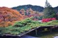 [京都新聞写真コンテス]遊龍の松