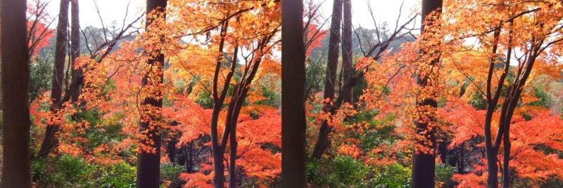 f:id:yujiro-1:20131212061016j:image:w640