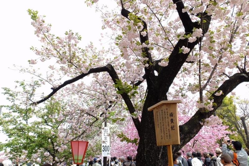 f:id:yujiro-1:20140413055843j:image:w640