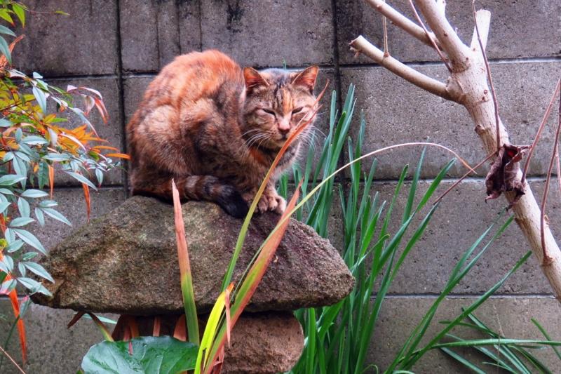f:id:yujiro-1:20160121055001j:image:w640