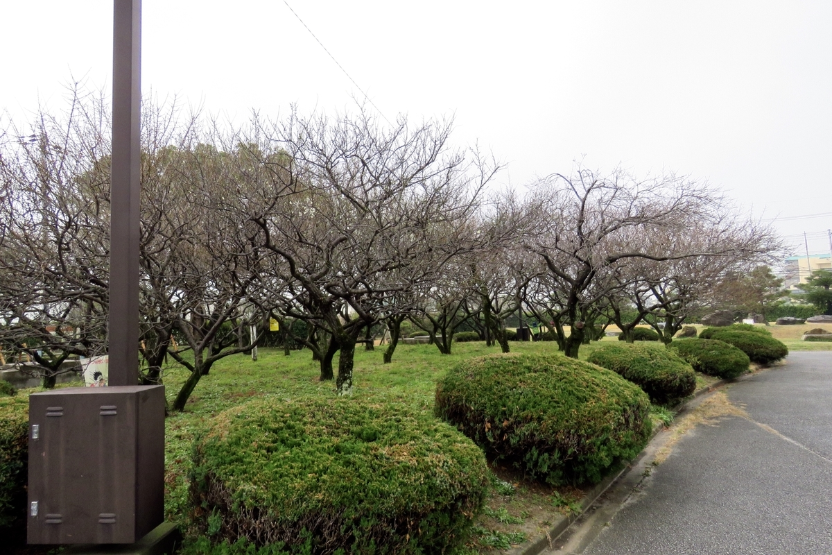 f:id:yujiro-1:20200125060323j:plain