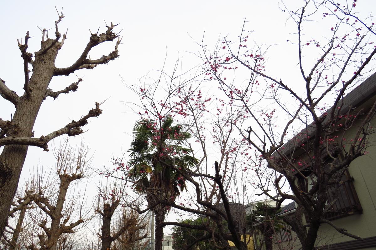 f:id:yujiro-1:20200125060701j:plain