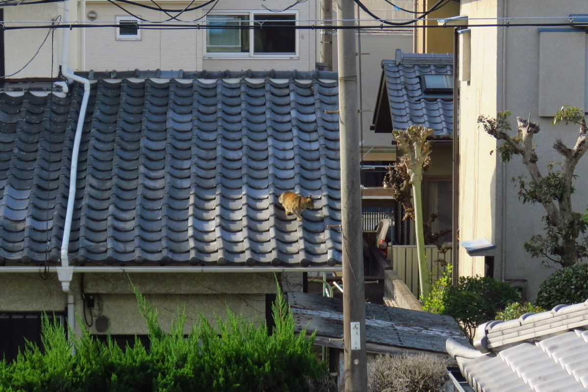 f:id:yujiro-1:20210326050100j:plain