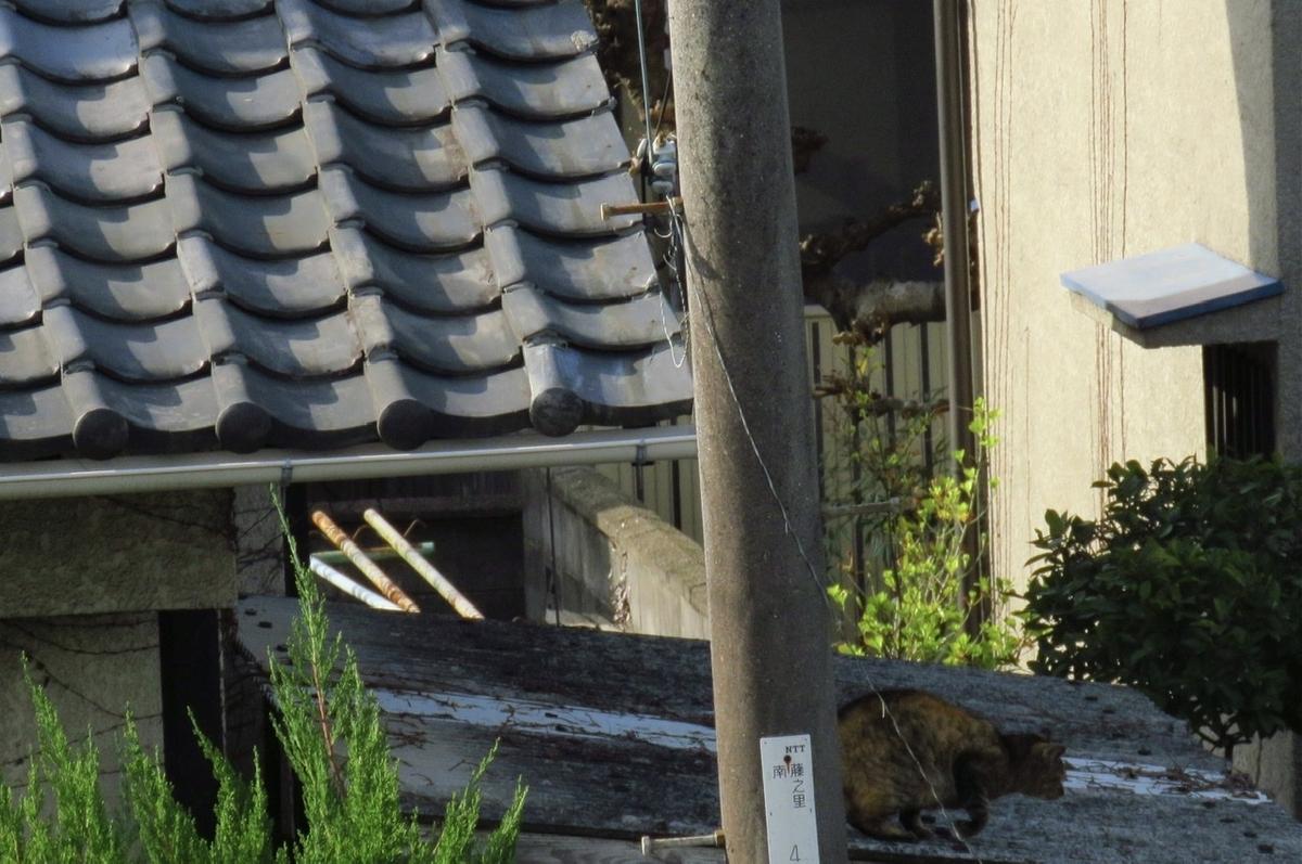 f:id:yujiro-1:20210326050457j:plain