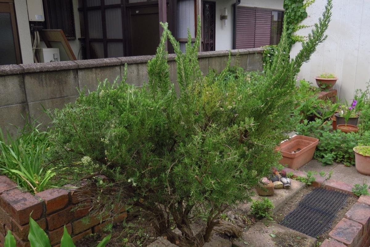 f:id:yujiro-1:20210510050614j:plain