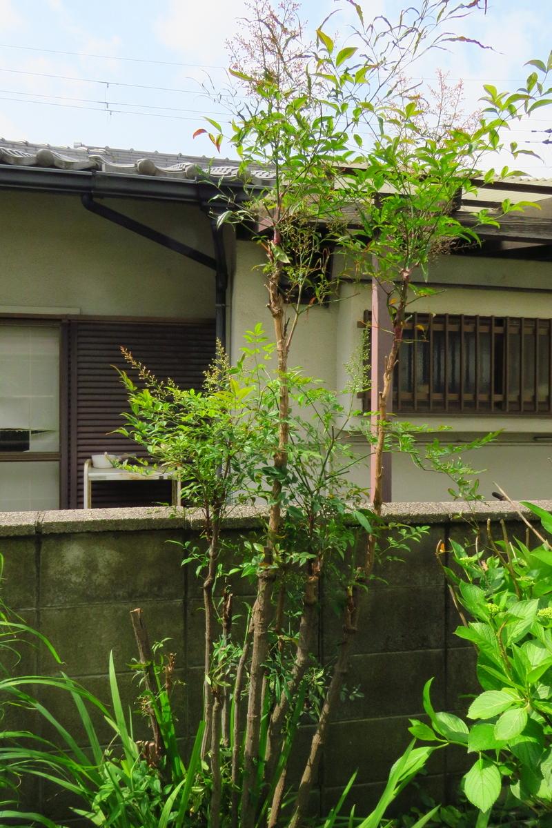 f:id:yujiro-1:20210510050919j:plain