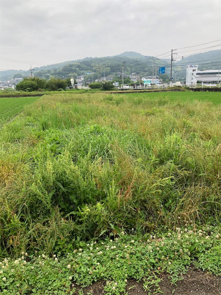 f:id:yujitaguchi:20200626092123j:image