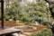 本法寺 巴の庭