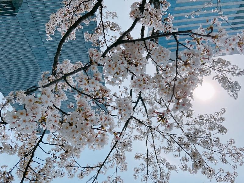 f:id:yuka_1:20210427101006j:plain