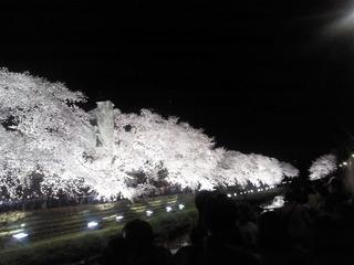 2015-野川ライトアップ